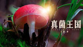真菌王国第二季