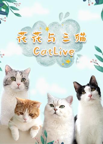 大陆 花花与三猫catlive2019